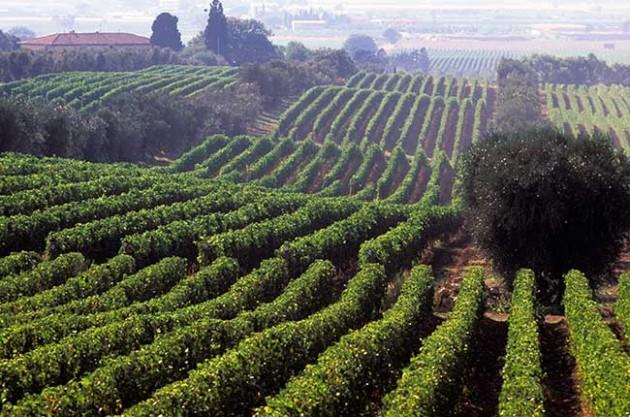 i Rosati – Rose Wines